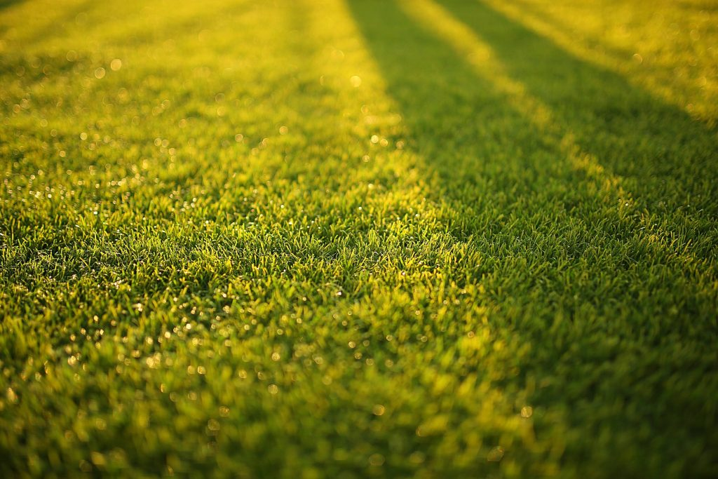 lawn aeration denver